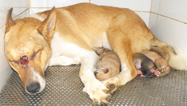 Eva and her puppies were taken to a quiet home so she can recuperate from her wounds and the puppies can be safe.
