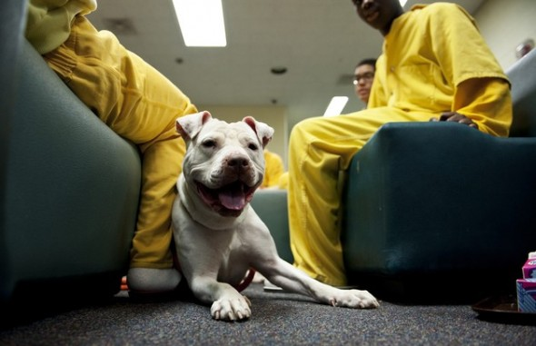 Humane Program Working With Juvenile Detention Centre To Stop Animal Cruelty